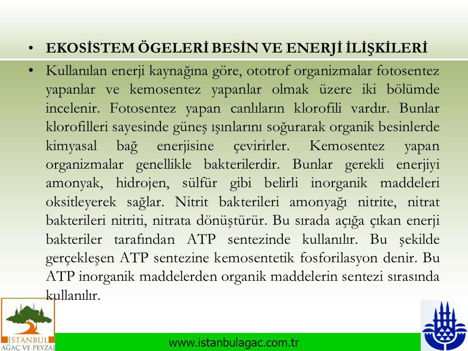 www.istanbulagac.com.tr •EKOSİSTEM ÖGELERİ BESİN VE ENERJİ İLİŞKİLERİ •Kullanılan enerji kaynağına göre, ototrof organizmalar fotosentez yapanlar ve k