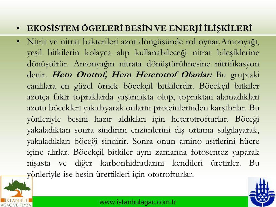 www.istanbulagac.com.tr •EKOSİSTEM ÖGELERİ BESİN VE ENERJİ İLİŞKİLERİ •Nitrit ve nitrat bakterileri azot döngüsünde rol oynar.Amonyağı, yeşil bitkiler