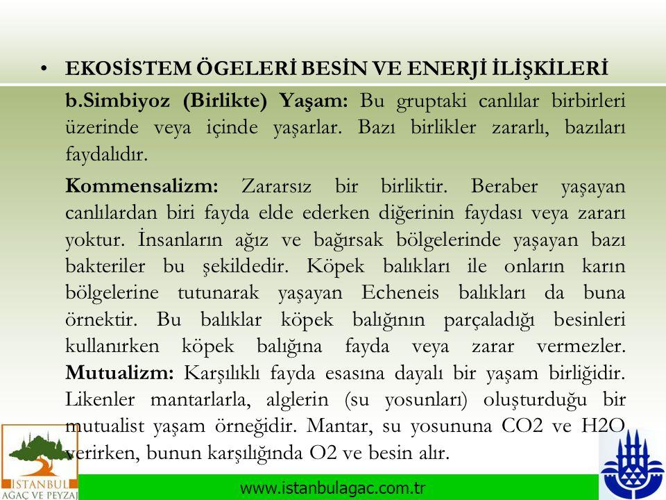 www.istanbulagac.com.tr •EKOSİSTEM ÖGELERİ BESİN VE ENERJİ İLİŞKİLERİ b.Simbiyoz (Birlikte) Yaşam: Bu gruptaki canlılar birbirleri üzerinde veya içind