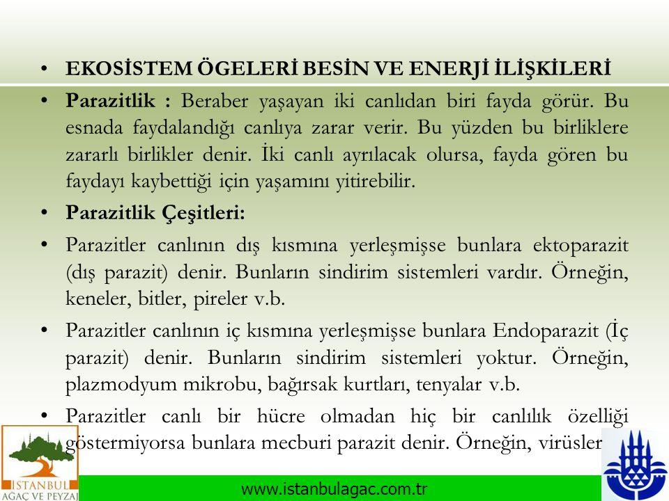 www.istanbulagac.com.tr •EKOSİSTEM ÖGELERİ BESİN VE ENERJİ İLİŞKİLERİ •Parazitlik : Beraber yaşayan iki canlıdan biri fayda görür. Bu esnada faydaland