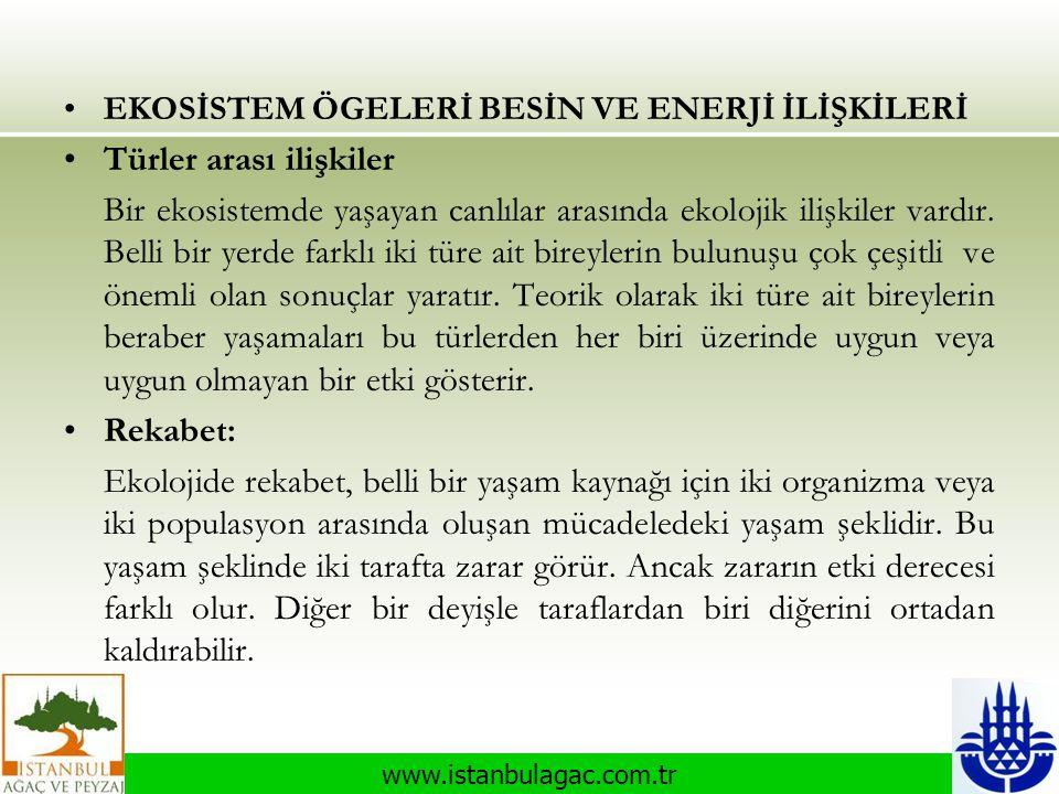www.istanbulagac.com.tr •EKOSİSTEM ÖGELERİ BESİN VE ENERJİ İLİŞKİLERİ •Türler arası ilişkiler Bir ekosistemde yaşayan canlılar arasında ekolojik ilişk