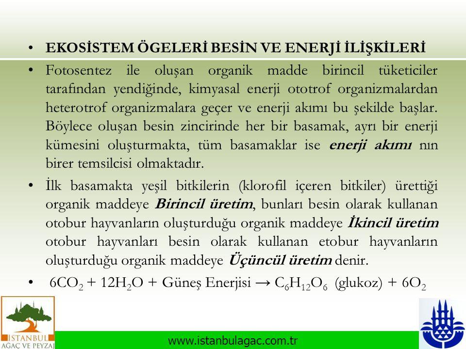 www.istanbulagac.com.tr •EKOSİSTEM ÖGELERİ BESİN VE ENERJİ İLİŞKİLERİ •Fotosentez ile oluşan organik madde birincil tüketiciler tarafından yendiğinde,