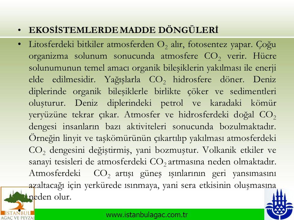www.istanbulagac.com.tr •EKOSİSTEMLERDE MADDE DÖNGÜLERİ •Litosferdeki bitkiler atmosferden O 2 alır, fotosentez yapar. Çoğu organizma solunum sonucund