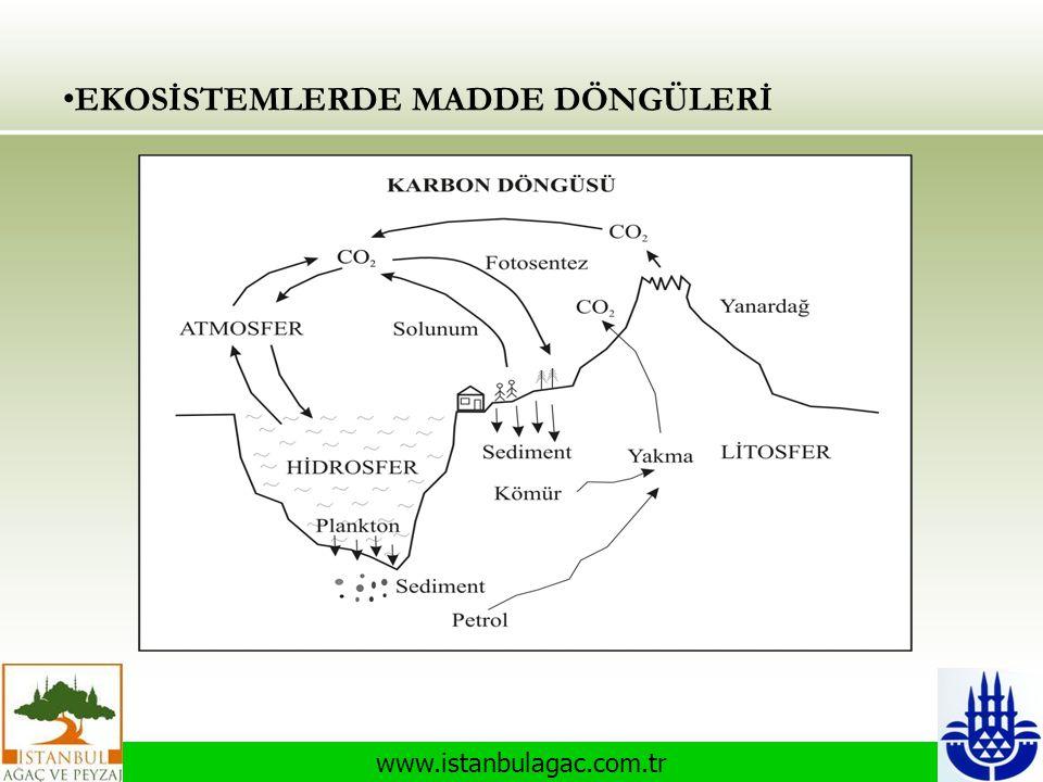 www.istanbulagac.com.tr • EKOSİSTEMLERDE MADDE DÖNGÜLERİ