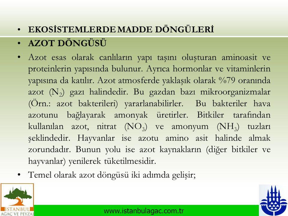 www.istanbulagac.com.tr •EKOSİSTEMLERDE MADDE DÖNGÜLERİ •AZOT DÖNGÜSÜ •Azot esas olarak canlıların yapı taşını oluşturan aminoasit ve proteinlerin yap