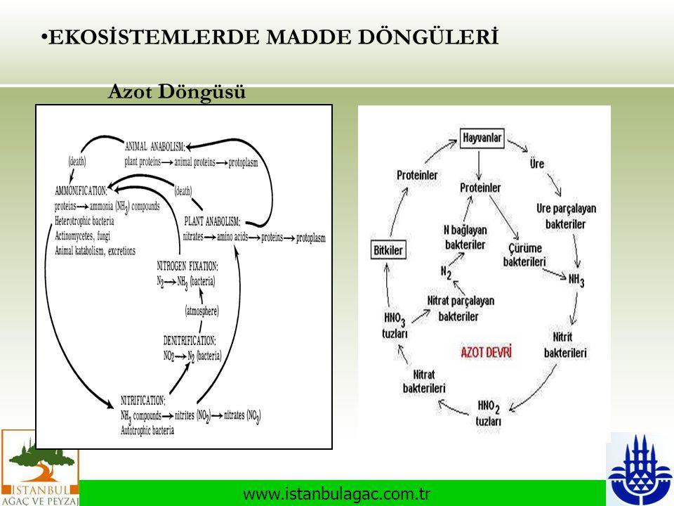 www.istanbulagac.com.tr • EKOSİSTEMLERDE MADDE DÖNGÜLERİ Azot Döngüsü