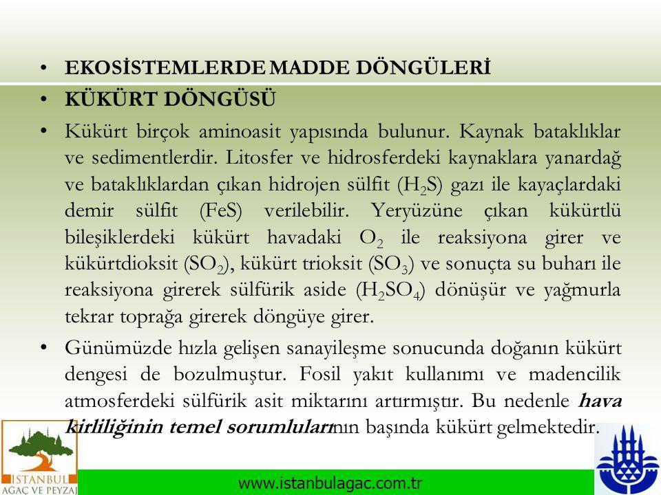 www.istanbulagac.com.tr •EKOSİSTEMLERDE MADDE DÖNGÜLERİ •KÜKÜRT DÖNGÜSÜ •Kükürt birçok aminoasit yapısında bulunur. Kaynak bataklıklar ve sedimentlerd