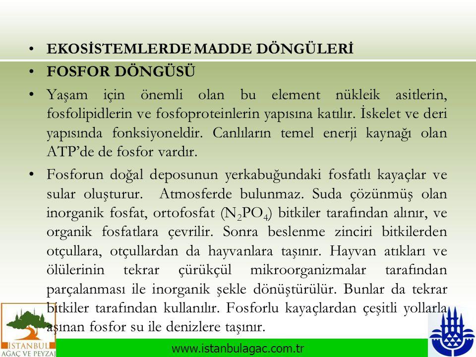 www.istanbulagac.com.tr •EKOSİSTEMLERDE MADDE DÖNGÜLERİ •FOSFOR DÖNGÜSÜ •Yaşam için önemli olan bu element nükleik asitlerin, fosfolipidlerin ve fosfo