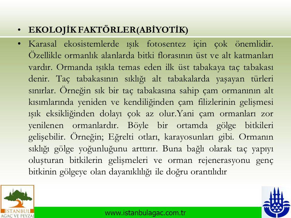 www.istanbulagac.com.tr •EKOLOJİK FAKTÖRLER(ABİYOTİK) •Karasal ekosistemlerde ışık fotosentez için çok önemlidir. Özellikle ormanlık alanlarda bitki f