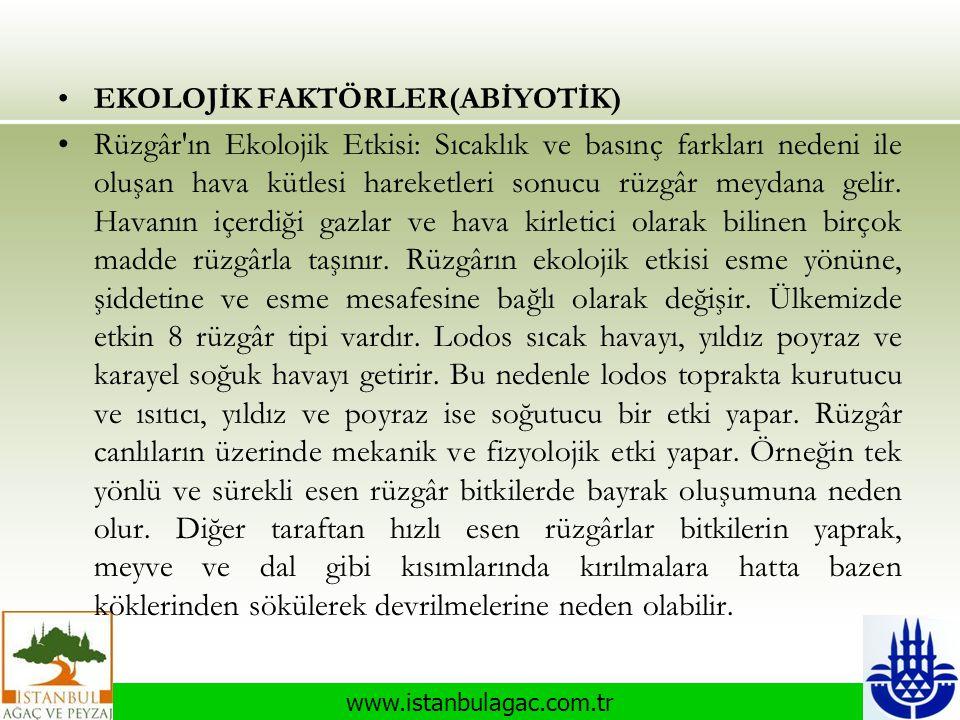 www.istanbulagac.com.tr •EKOLOJİK FAKTÖRLER(ABİYOTİK) •Rüzgâr'ın Ekolojik Etkisi: Sıcaklık ve basınç farkları nedeni ile oluşan hava kütlesi hareketle