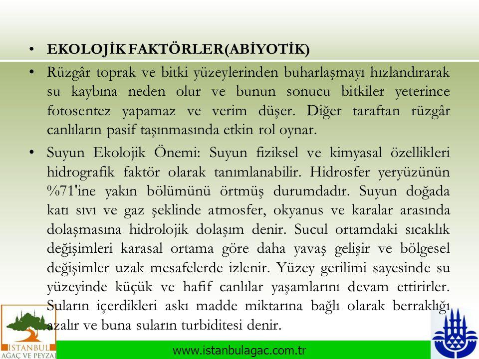 www.istanbulagac.com.tr •EKOLOJİK FAKTÖRLER(ABİYOTİK) •Rüzgâr toprak ve bitki yüzeylerinden buharlaşmayı hızlandırarak su kaybına neden olur ve bunun