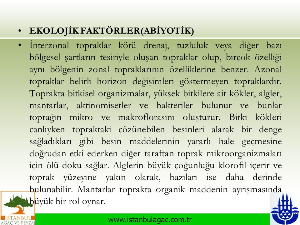 www.istanbulagac.com.tr •EKOLOJİK FAKTÖRLER(ABİYOTİK) •İnterzonal topraklar kötü drenaj, tuzluluk veya diğer bazı bölgesel şartların tesiriyle oluşan