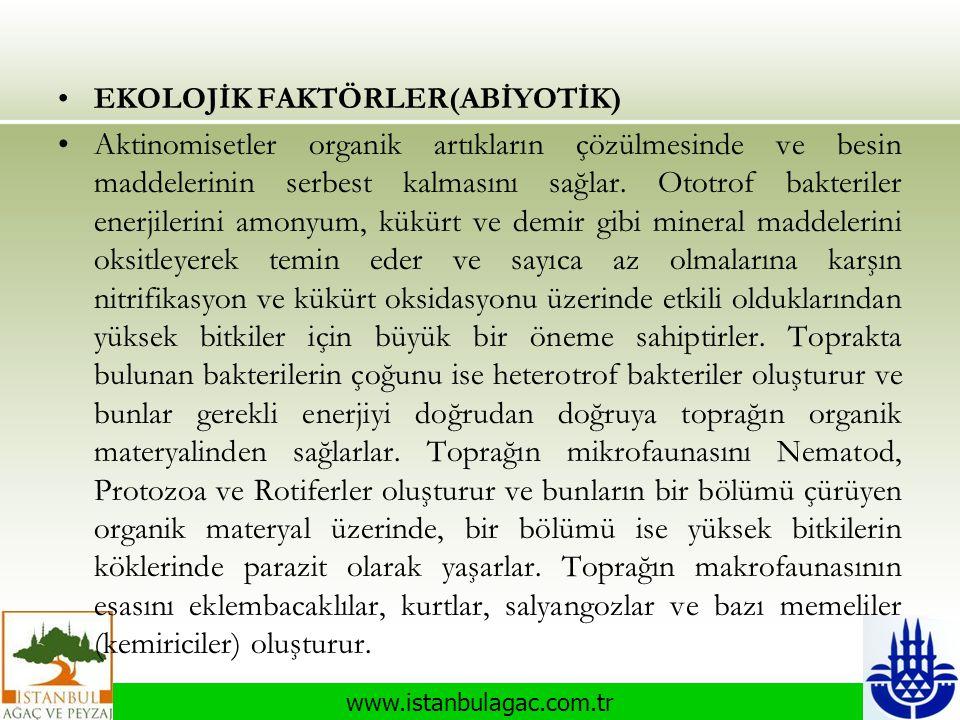 www.istanbulagac.com.tr •EKOLOJİK FAKTÖRLER(ABİYOTİK) •Aktinomisetler organik artıkların çözülmesinde ve besin maddelerinin serbest kalmasını sağlar.