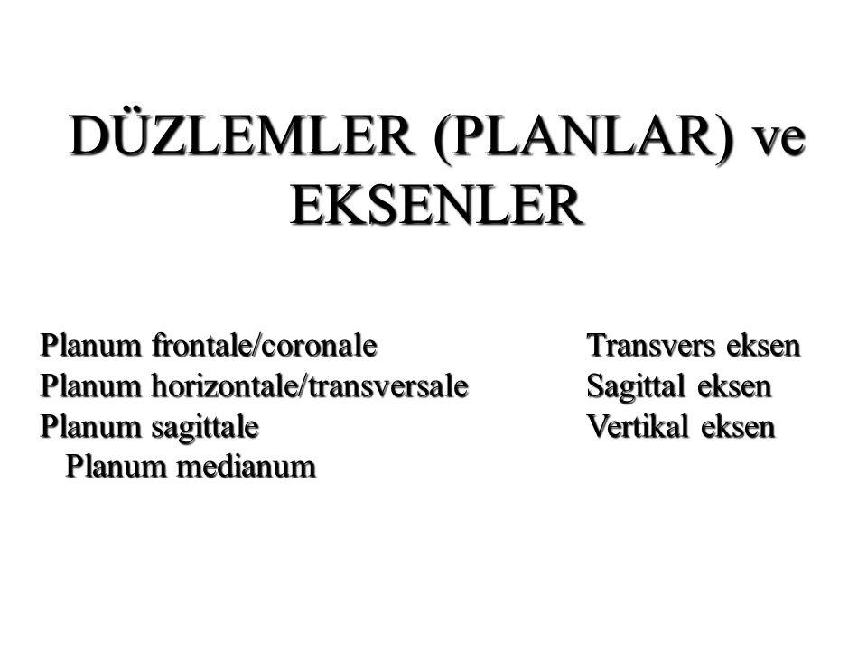 DÜZLEMLER (PLANLAR) ve EKSENLER Transvers eksen Sagittal eksen Vertikal eksen Planum frontale/coronale Planum horizontale/transversale Planum sagittale Planum medianum Planum medianum