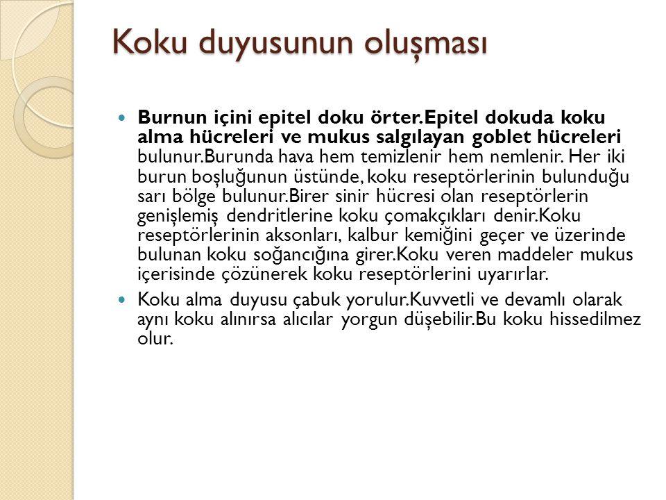Koku duyusunun oluşması  Burnun içini epitel doku örter.Epitel dokuda koku alma hücreleri ve mukus salgılayan goblet hücreleri bulunur.Burunda hava h
