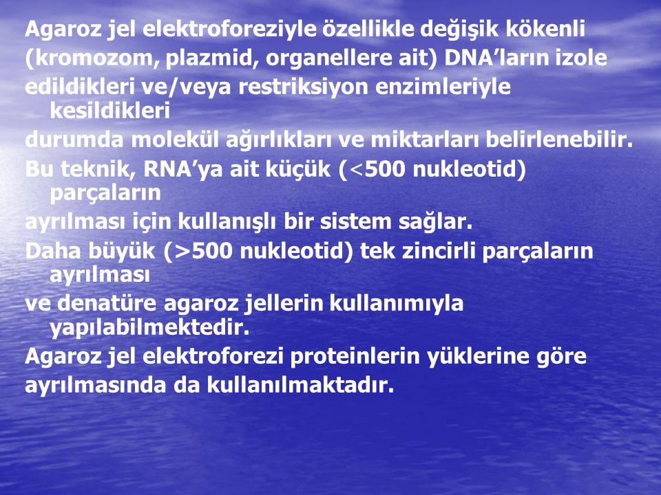 Agaroz jel elektroforeziyle özellikle değişik kökenli (kromozom, plazmid, organellere ait) DNA'ların izole edildikleri ve/veya restriksiyon enzimleriy
