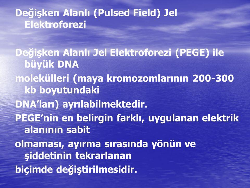 Değişken Alanlı (Pulsed Field) Jel Elektroforezi Değişken Alanlı Jel Elektroforezi (PEGE) ile büyük DNA molekülleri (maya kromozomlarının 200-300 kb b
