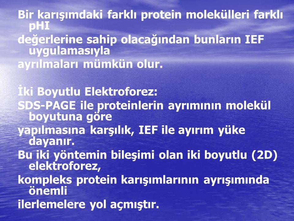Bir karışımdaki farklı protein molekülleri farklı pHI değerlerine sahip olacağından bunların IEF uygulamasıyla ayrılmaları mümkün olur. İki Boyutlu El