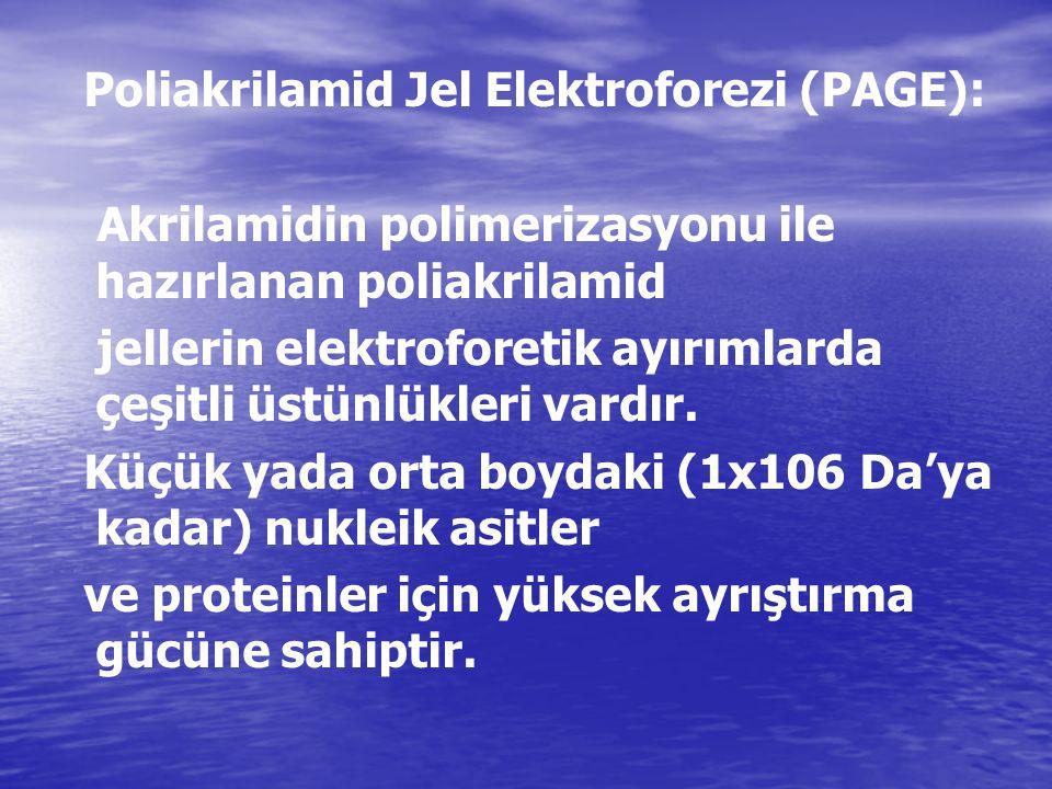 Poliakrilamid Jel Elektroforezi (PAGE): Akrilamidin polimerizasyonu ile hazırlanan poliakrilamid jellerin elektroforetik ayırımlarda çeşitli üstünlükl