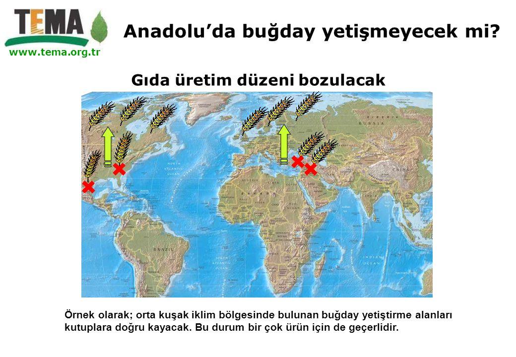 www.tema.org.tr Gıda üretim düzeni bozulacak Örnek olarak; orta kuşak iklim bölgesinde bulunan buğday yetiştirme alanları kutuplara doğru kayacak. Bu