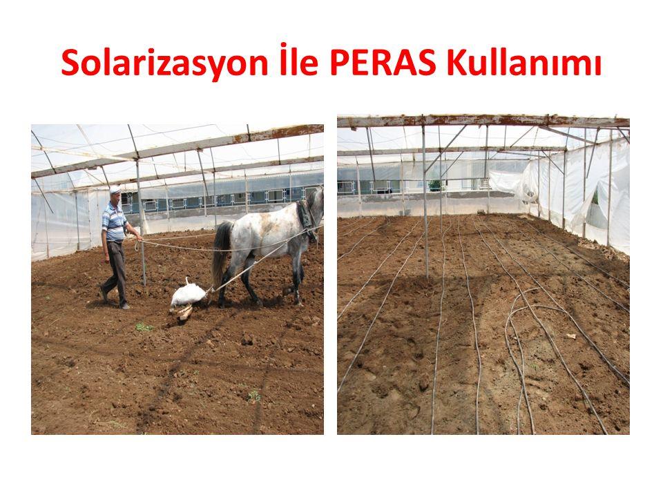 Solarizasyon İle PERAS Kullanımı