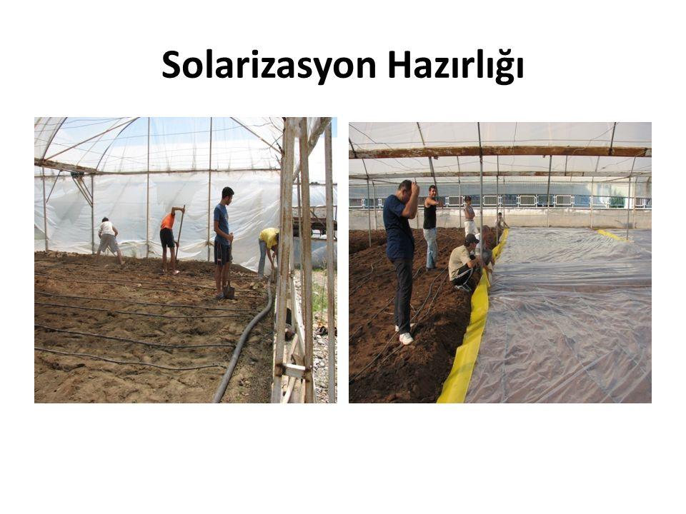 Solarizasyon Hazırlığı