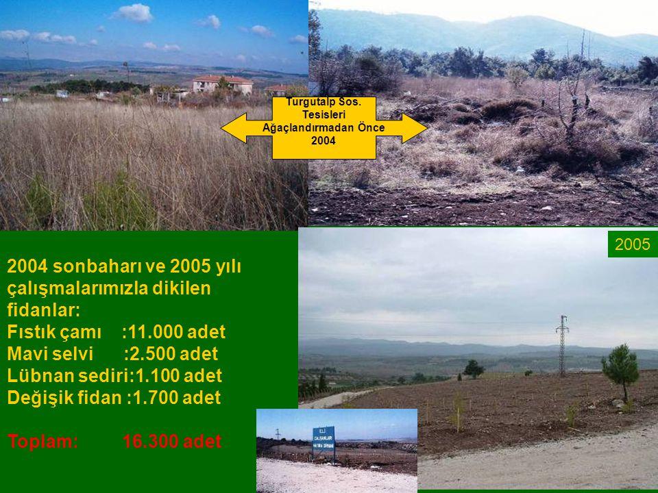 2004 sonbaharı ve 2005 yılı çalışmalarımızla dikilen fidanlar: Fıstık çamı :11.000 adet Mavi selvi :2.500 adet Lübnan sediri:1.100 adet Değişik fidan
