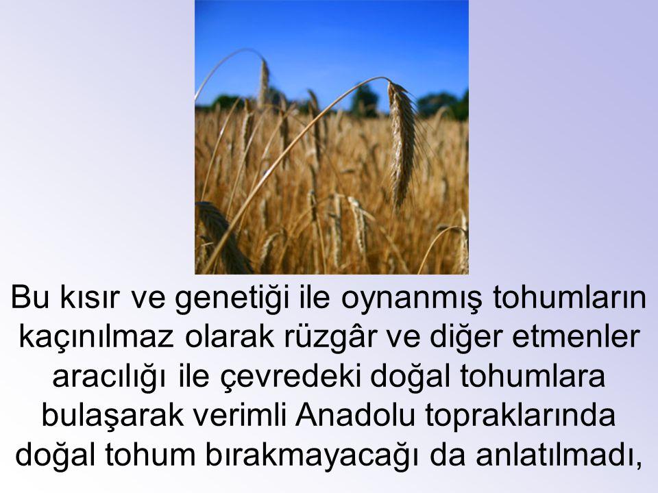 Bu kısır ve genetiği ile oynanmış tohumların kaçınılmaz olarak rüzgâr ve diğer etmenler aracılığı ile çevredeki doğal tohumlara bulaşarak verimli Anad