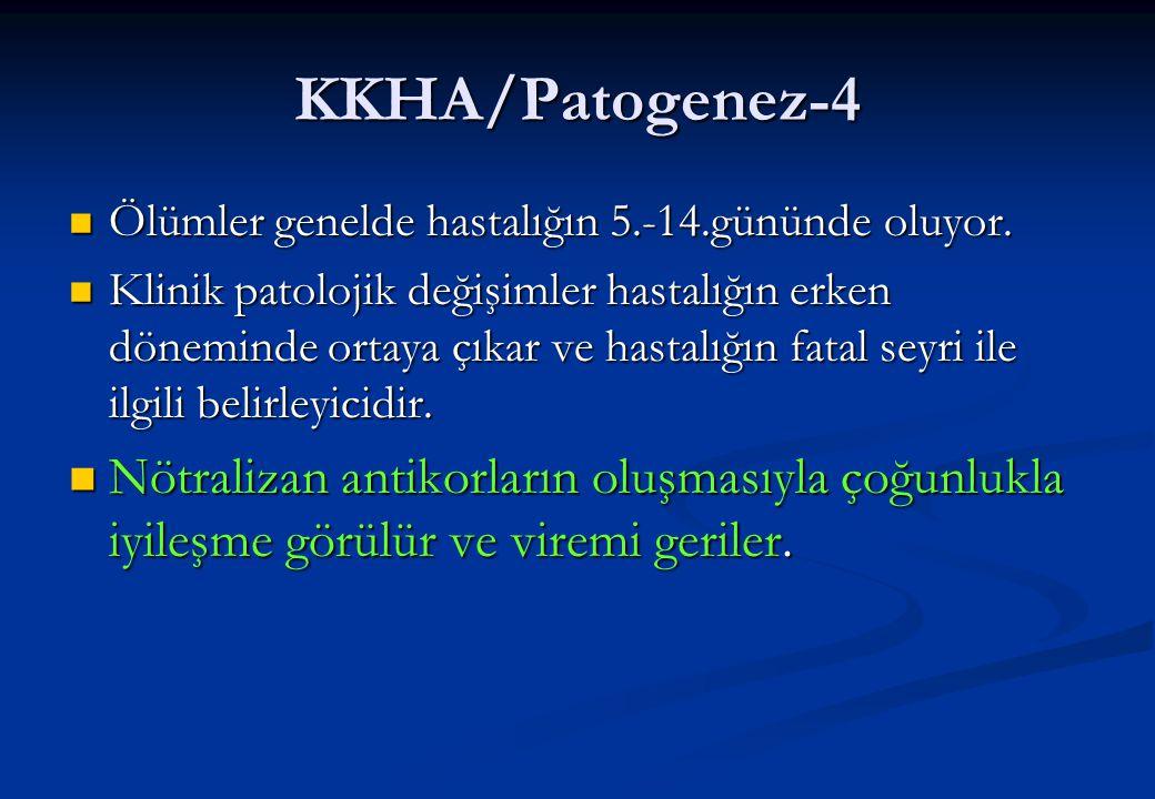 KKHA/Patogenez-4  Ölümler genelde hastalığın 5.-14.gününde oluyor.  Klinik patolojik değişimler hastalığın erken döneminde ortaya çıkar ve hastalığı