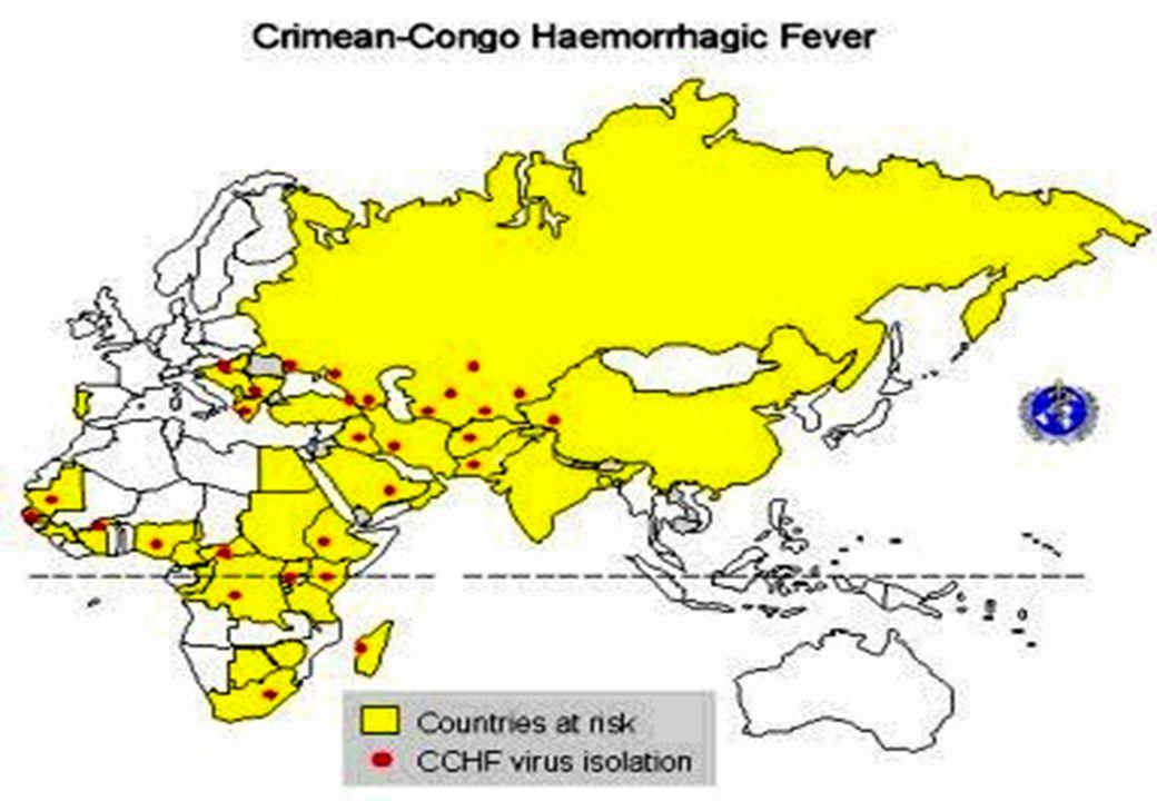 Nairoviruslar  İki önemli serogrup:  Kırım-Kongo Hemorajik Ateş (KKHA) virusu grubu; KKHA virusu ve Hazara virus  Nairobi Koyun Hastalığı Grubu; Nairobi Koyun virusu ve Dugbe virus  İnsanlara argasid veya ixodid keneleriyle geçer,  İnsanlarda infeksiyon tesadüfidir.