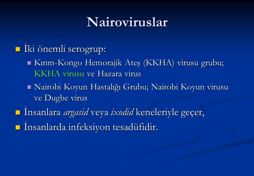 Nairoviruslar  İki önemli serogrup:  Kırım-Kongo Hemorajik Ateş (KKHA) virusu grubu; KKHA virusu ve Hazara virus  Nairobi Koyun Hastalığı Grubu; Na
