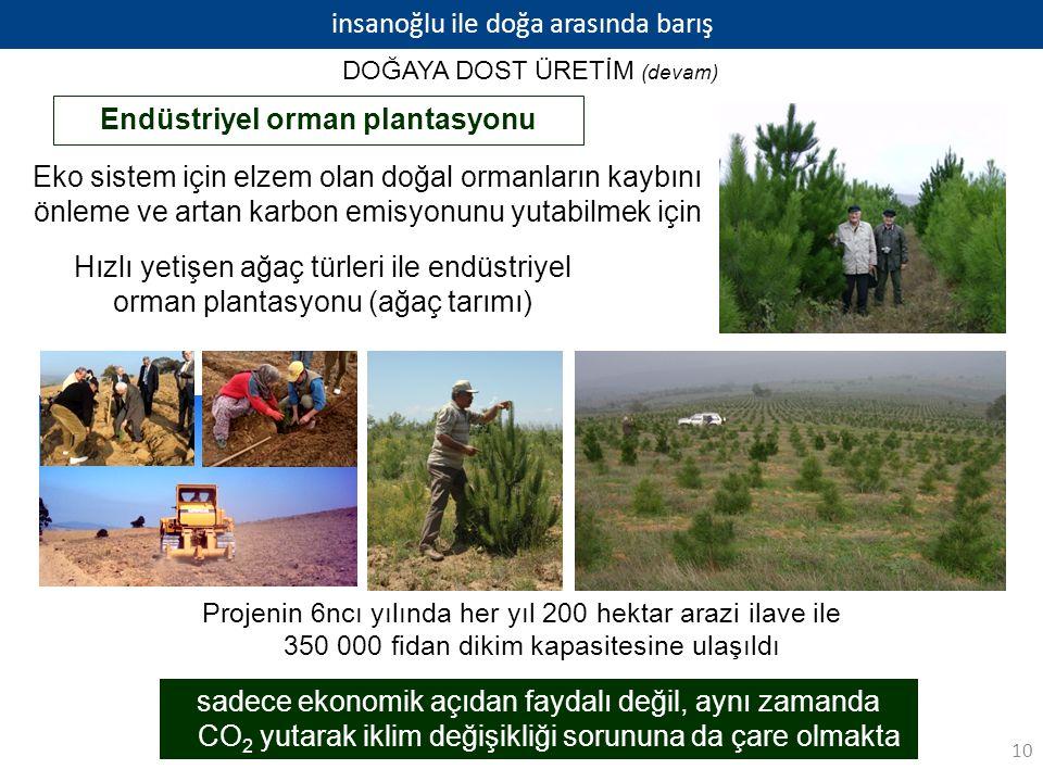 insanoğlu ile doğa arasında barış Endüstriyel orman plantasyonu Eko sistem için elzem olan doğal ormanların kaybını önleme ve artan karbon emisyonunu