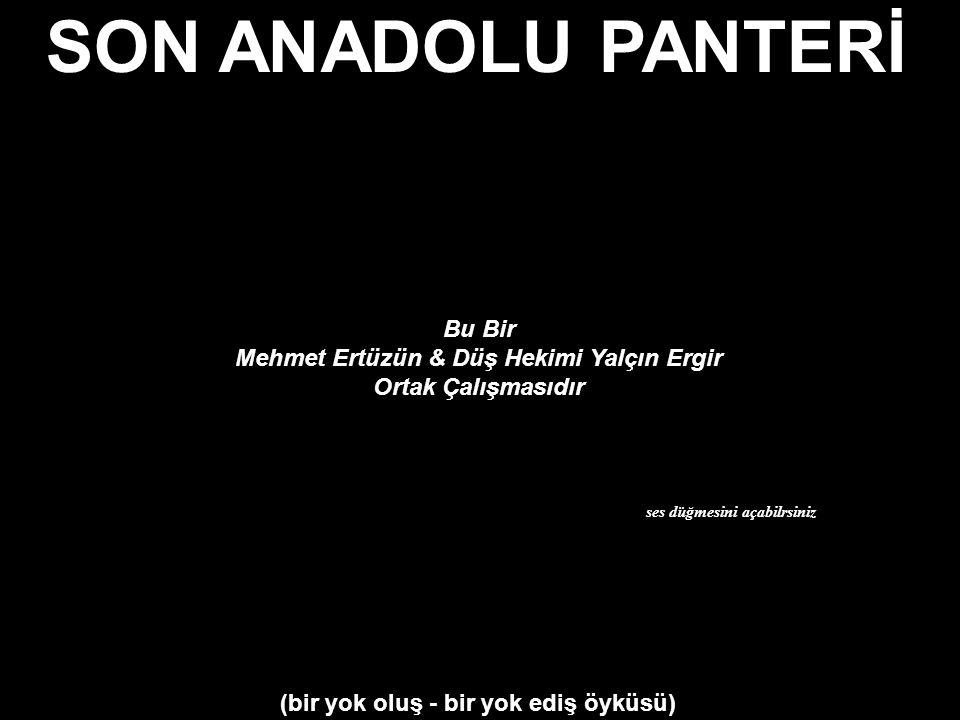 SON ANADOLU PANTERİ Bu Bir Mehmet Ertüzün & Düş Hekimi Yalçın Ergir Ortak Çalışmasıdır ses düğmesini açabilrsiniz (bir yok oluş - bir yok ediş öyküsü)