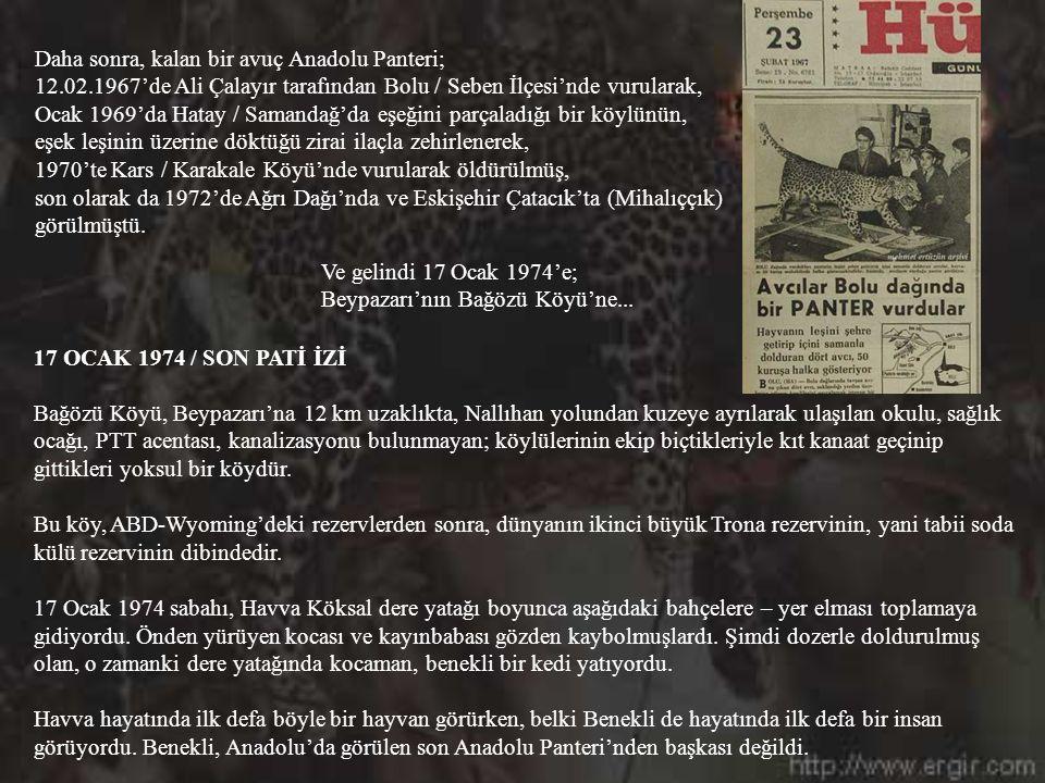 Ama hiçbir avcı Anadolu Panteri'nin nesline Mantolu Hasan'ın verdiği zararı veremedi. 1930-1950 yıllarında İzmirli avcı Hasan Bele, tek başına yaklaşı