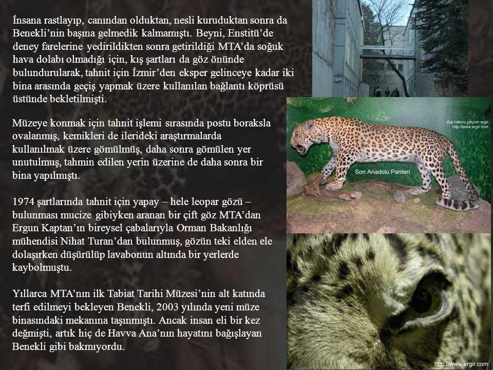 O düş hekimi de daha önce Çumra'da yaşayan veteriner hekim Deniz Cengiz Soykan'ın Atlas Dergisi'ne yazdığı; Mersin'in Mut ilçesinin Çampınarı (Kahtama