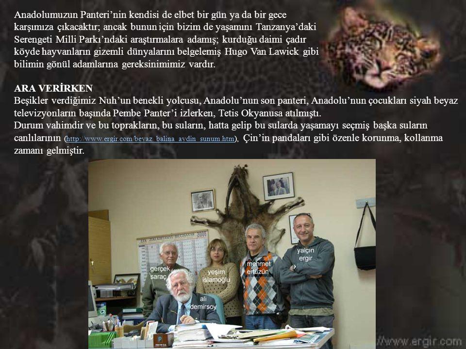 Şu anda Termessos'tan, Dilek Yarımadası'na kadar pek çok yerde bireysel ya da WWF gibi kuruluşların araştırmaları sürmektedir. Cemal Gülas'ın Kaçkar d