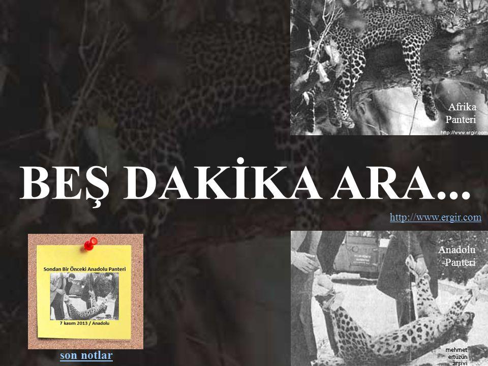 bu belgesel düz yazı olarak: http://www.ergir.com/son_anadolu_panteri_yazi.htm & Mehmet Ertüzün tarafından çevrilmiş İngilizce düz yazı olarak: http:/