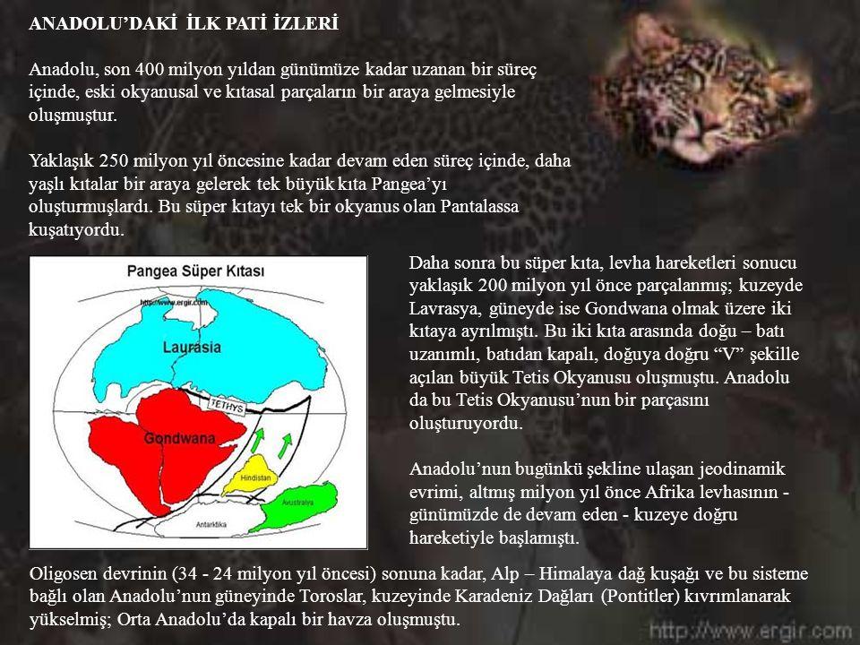 BEŞ DAKİKA ARA... http://www.ergir.com Afrika Panteri Anadolu Panteri son notlar