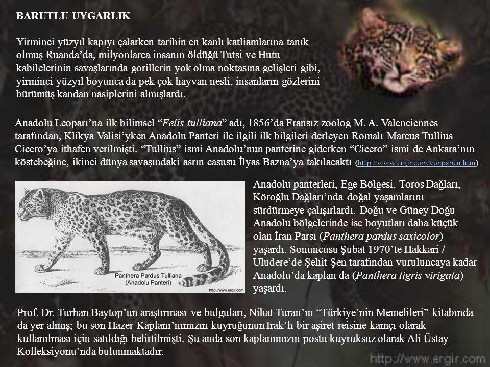 Pantera Pardus Tulliana'nın (Anadolu Panteri), Anadolu Platoları'nda bir tarihte bolca bulunduğunun en önemli delillerinden sayılan Osmanlı Minyatürle