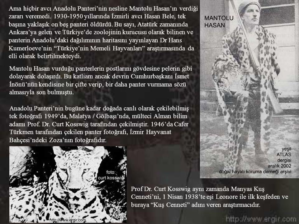 Ama hiçbir avcı Anadolu Panteri'nin nesline Mantolu Hasan'ın verdiği zararı veremedi.