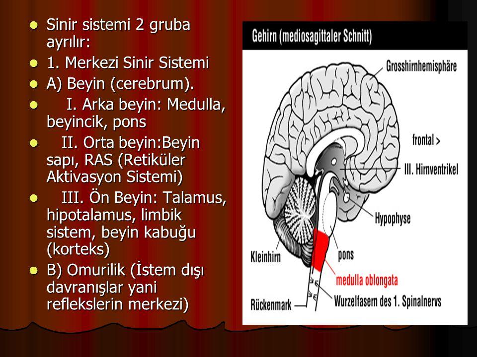  Sinir sistemi 2 gruba ayrılır:  1. Merkezi Sinir Sistemi  A) Beyin (cerebrum).  I. Arka beyin: Medulla, beyincik, pons  II. Orta beyin:Beyin sap