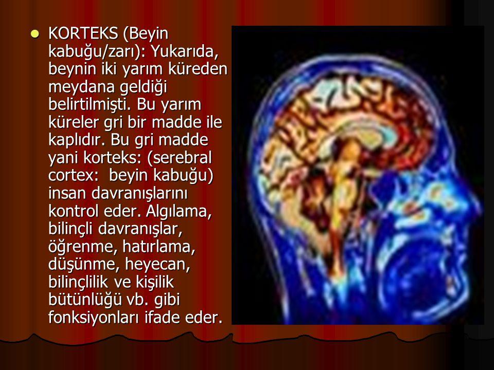  KORTEKS (Beyin kabuğu/zarı): Yukarıda, beynin iki yarım küreden meydana geldiği belirtilmişti. Bu yarım küreler gri bir madde ile kaplıdır. Bu gri m