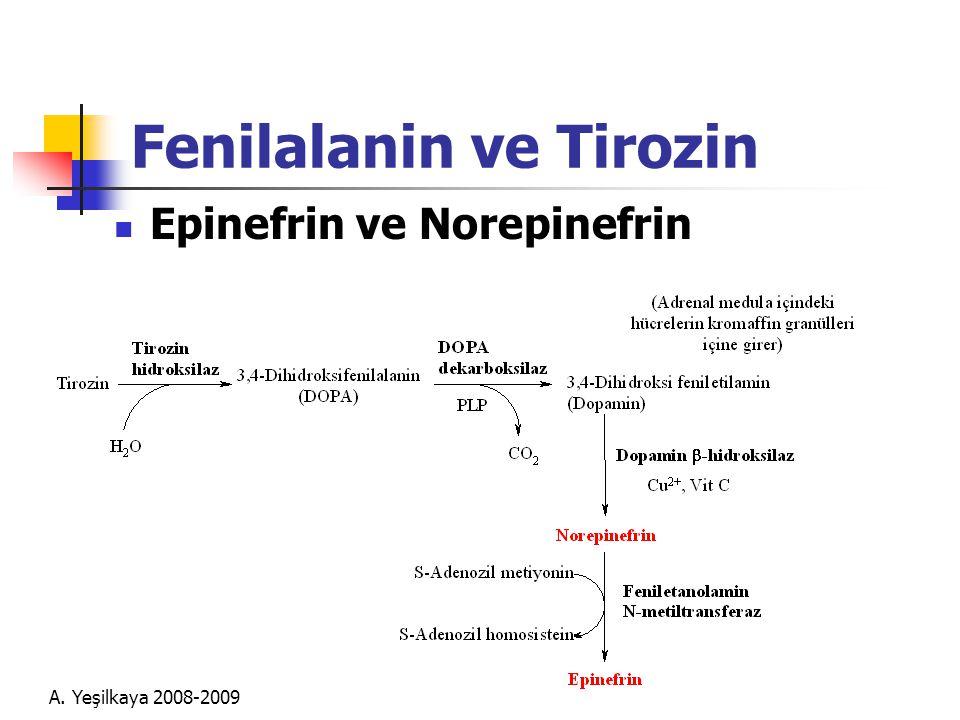 A. Yeşilkaya 2008-2009 Fenilalanin ve Tirozin  Epinefrin ve Norepinefrin