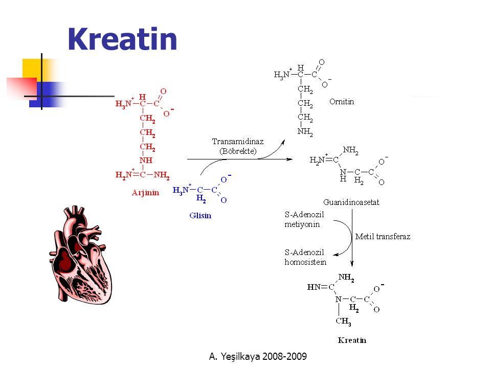 A. Yeşilkaya 2008-2009 Kreatin