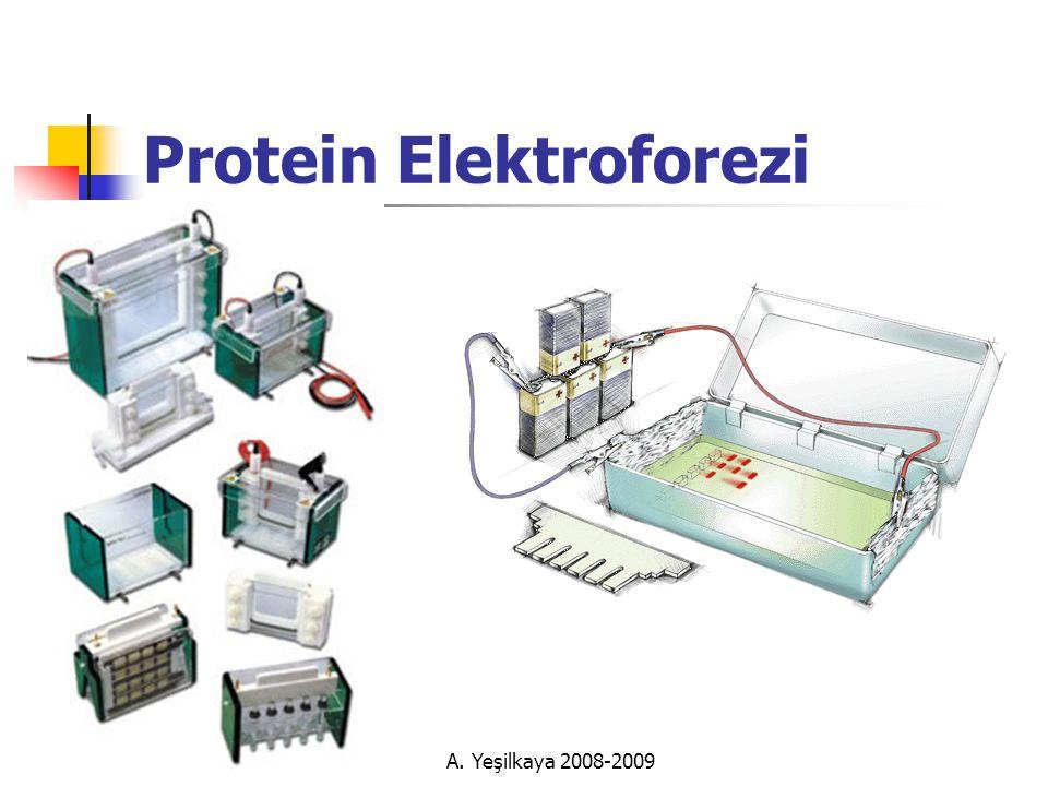 Protein Elektroforezi A. Yeşilkaya 2008-2009