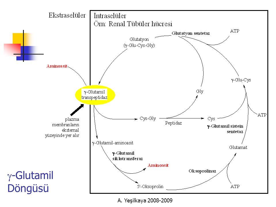 A. Yeşilkaya 2008-2009  -Glutamil Döngüsü