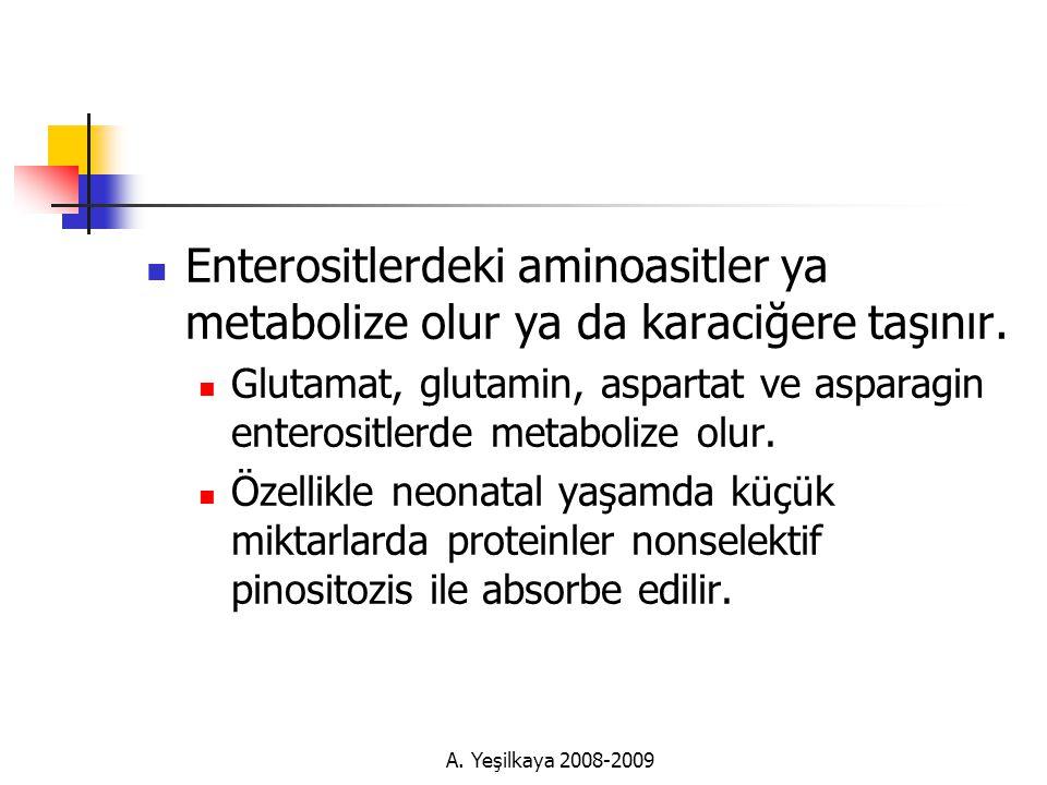 A.Yeşilkaya 2008-2009  Enterositlerdeki aminoasitler ya metabolize olur ya da karaciğere taşınır.