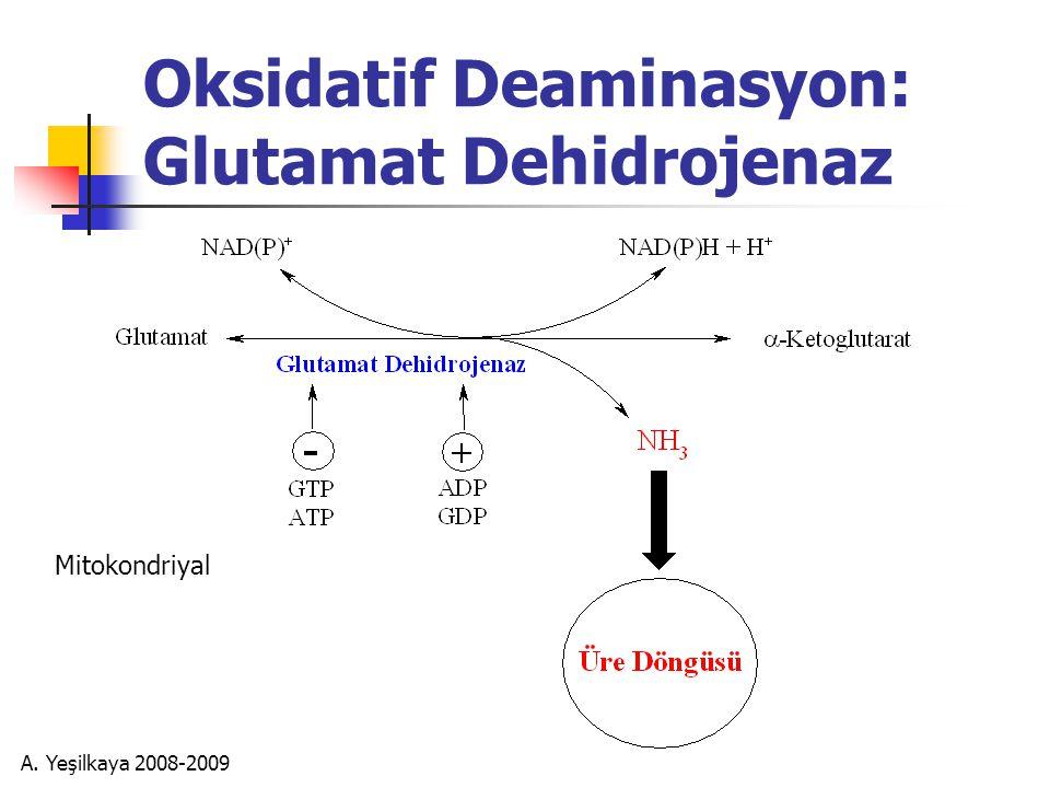 A. Yeşilkaya 2008-2009 Oksidatif Deaminasyon: Glutamat Dehidrojenaz Mitokondriyal