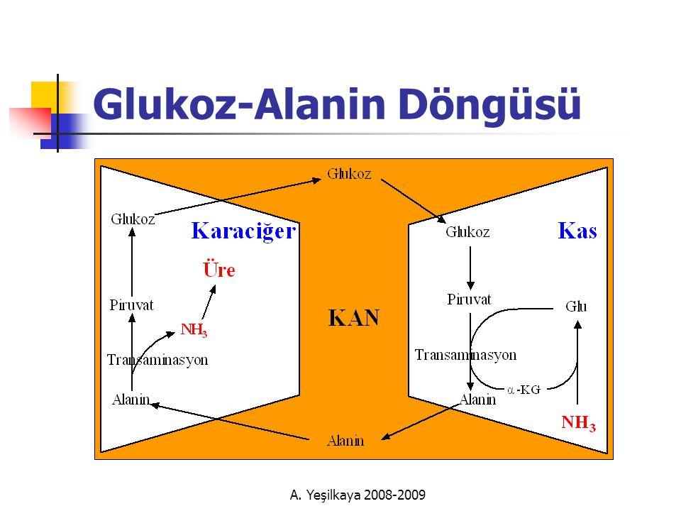 A. Yeşilkaya 2008-2009 Glukoz-Alanin Döngüsü