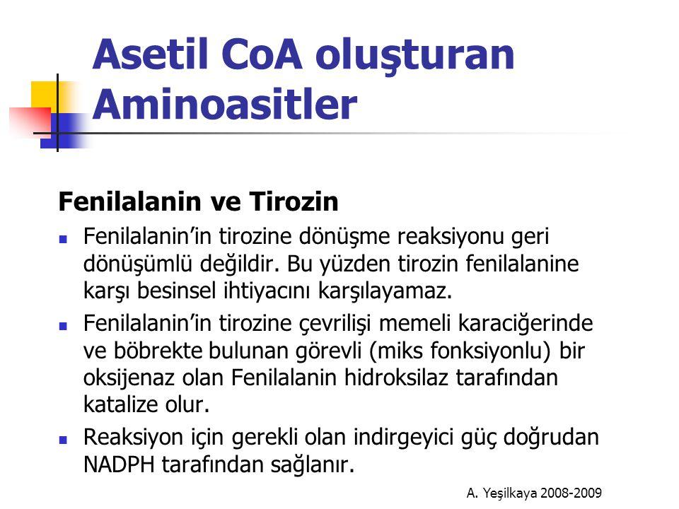Asetil CoA oluşturan Aminoasitler Fenilalanin ve Tirozin  Fenilalanin'in tirozine dönüşme reaksiyonu geri dönüşümlü değildir.